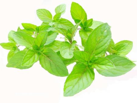 fresh ripe mint leaves isolated on white background photo