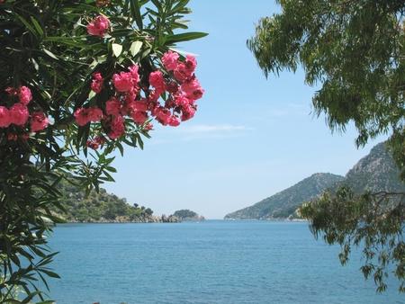 view of island in aegean sea in oleander frame