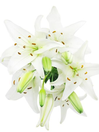 lilia: white lilies isolated on white background