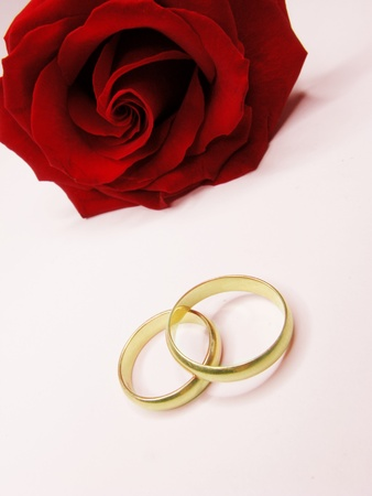 red rose and wedding rings isolated photo