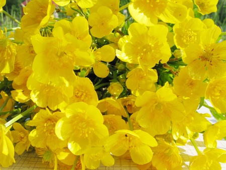 yellow buttercups field flowers as floral background Stock Photo - 11495202