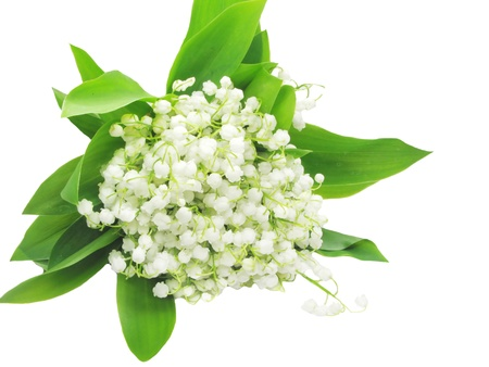 lily of the valley flowers isolated on white background Stock Photo