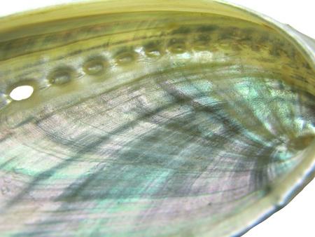 perlas: haliotis concha marina multicolor Primer plano