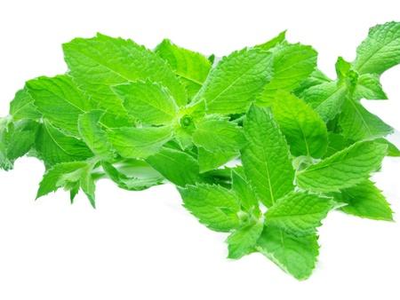 fresh ripe mint leaves isolated on white bacvkground photo