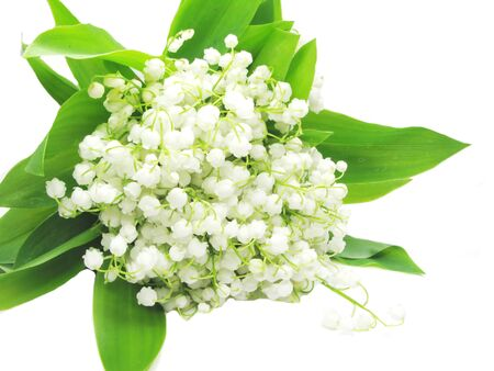 white lily of the valley isolated on white background photo