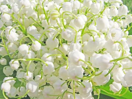 Giglio bianco del fondo valle floreale Archivio Fotografico - 11495479