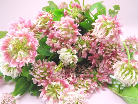 bouquet of pink clover field flowers as floral background Stock Photo - 11761978