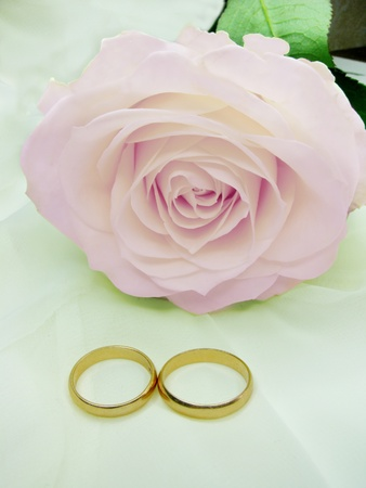 pink rose and wedding rings on silk beige background photo