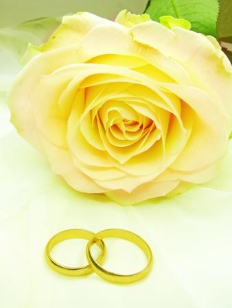 Rosa gialla e anelli di nozze su sfondo beige satinato Archivio Fotografico - 11850608