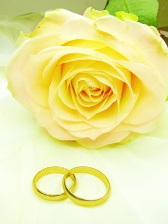yellow rose and wedding rings on satin beige background Stock Photo
