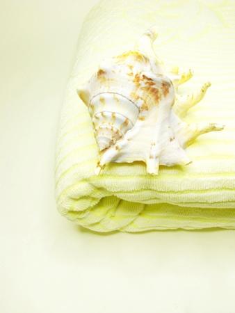 sea shell on bathing towel isolated photo