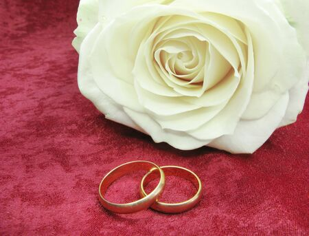 wedding rings and white rose on red velvet background photo