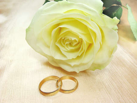 yellow rose and wedding rings on satin beige background photo