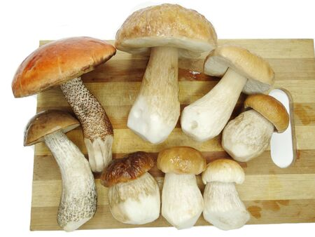fresh edible forest mushrooms on cutting board Stock Photo