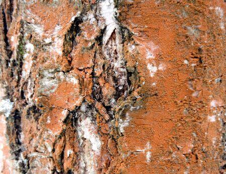 Baumrinde Holz Muster abstrakte Textur Hintergrund Standard-Bild