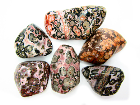 leopard jasper semigem crystals geological mineral set isolated  Stock Photo