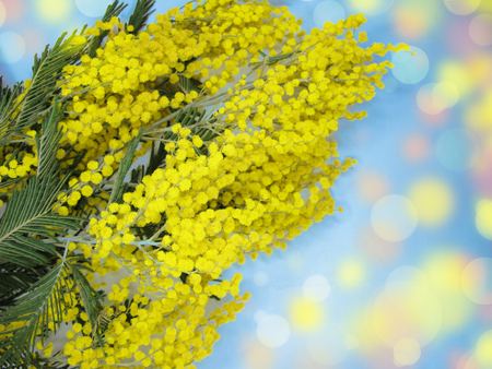 Mimosa yellow flowers bush floral spring background 8 march greeting mimosa yellow flowers bush floral spring background 8 march greeting card stock photo 97698349 mightylinksfo