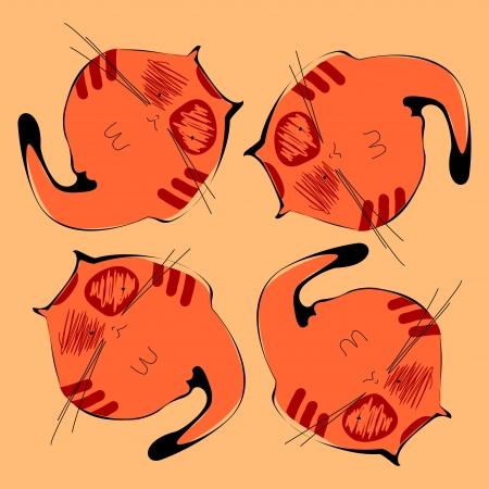 gato naranja: gato naranja Vectores