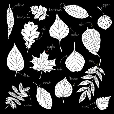 Collection of different kinds of leaves Vector