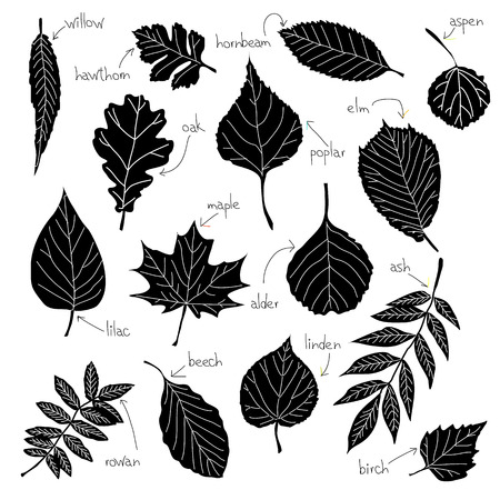 Collection of different kinds of leaves Illustration
