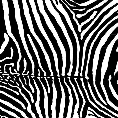 Zebra background  イラスト・ベクター素材