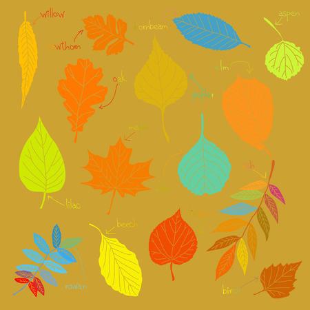 Color sheets Vector
