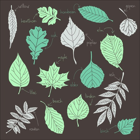 set of leaves from trees  Vector