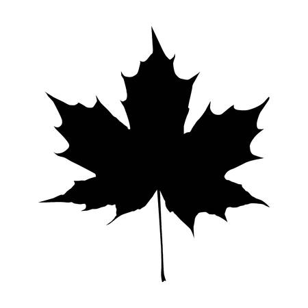 Maple Leaf Silhouette for your design. EPS10 vector illustration.