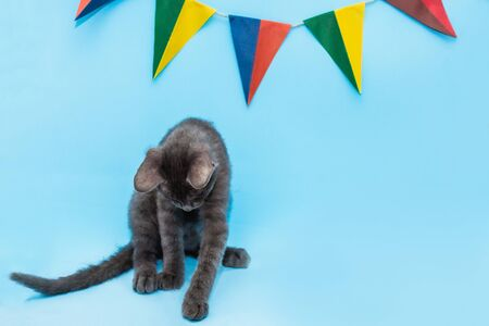 on a blue background hang two-color flags of different colors, the kitten is sitting under the flag.