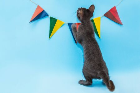 on a blue background hang two-color flags of different colors, a kitten plays under the flags