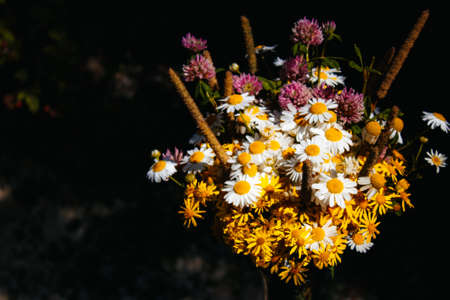 daisies, clover, yellow flowers, grass sedge in a field bouquet on a black background