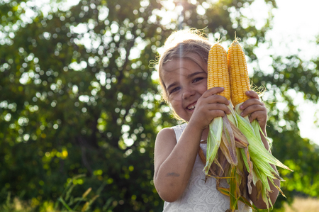 Adorable Little girl playing in a corn field on beautiful autumn day. Pretty child holding a cob of corn. Harvesting with kids. Autumn activities for children. Фото со стока