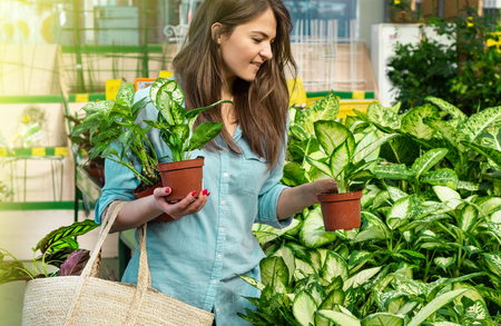 Beautiful girl customer chooses ficus plants in the retail store. Gardening In Greenhouse. Botanical garden, flower farming, horticultural industry concept