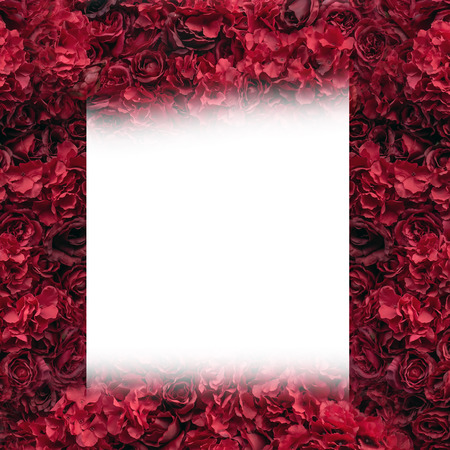 Beautiful red roses. Flower wall. Close-up of huge red roses. Valentines day present. Love and passion. Floral design. Summer and spring.Place for tex Imagens