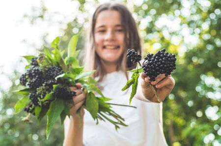 Girl holds in hands clusters fruit black elderberry in garden (Sambucus nigra). Elder, black elder. European black elderberry background