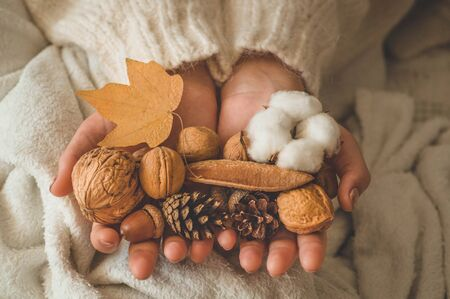 A woman holds in her hands a beautiful fall assortment. Cotton, cone, nut and acorn. Woman relaxing at home. Comfy lifestyle