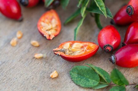 Freshly picked rose hips. Rose hip or rosehip, commonly known as the dog rose (Rosa canina).