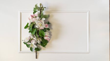 Spring apple blossom branches over white background. Top view, flat lay Banque d'images