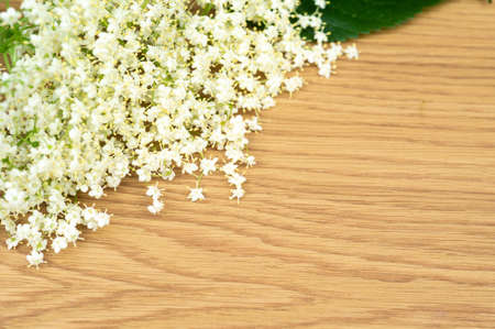 Elderberry flowers on wood background. Alternative medicine, copy space for text or inscription.