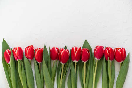 Greeting card. Bouquet red tulips on white background