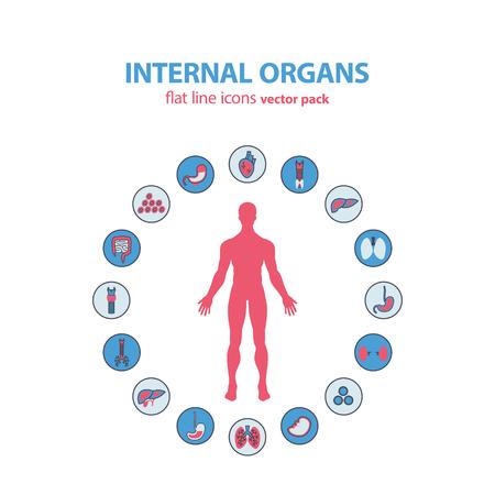bowel surgery: Human anatomy icons. internal organs icon set. Illustration.