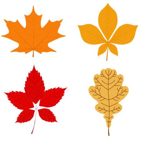 Vector illustration: set of autumn leaves. Maple, chestnut, oak, wild grapes.