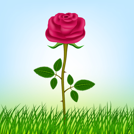 Pink rose in the grass on a blue background.