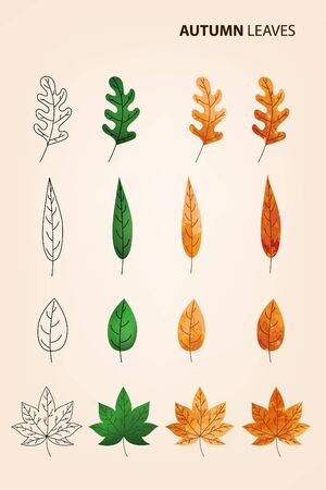 alder: Stages leaf aging.. Autumn leaves vector set in flight. Yellow and red leaves on a beige background