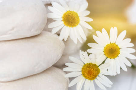 restful: restful image of white stones and daisies