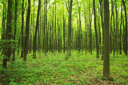 forest green Banco de Imagens