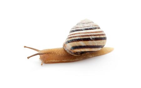 slithery: snail Stock Photo