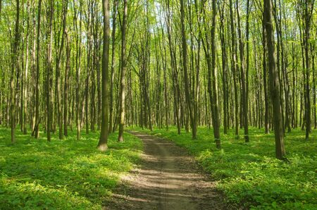 Path in spring green forest Banco de Imagens