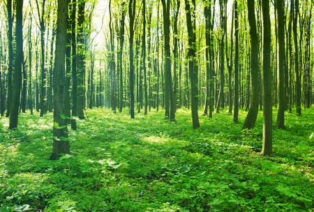 Forêt verte Banque d'images - 37652441
