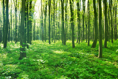 forest green Standard-Bild